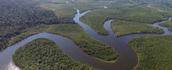 Concedidas 5 Ayudas a Equipos de Investigación Científica en Ecología y Biología de la Conservación