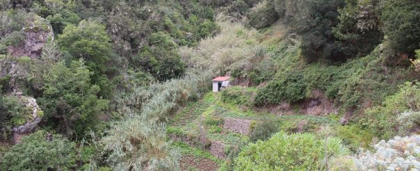 Nuevo proyecto sobre especies invasoras financiado por el BBVA para la Universidad de La Laguna, con investigadores de la ULPGC y de CSIC.
